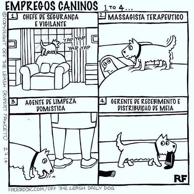 O MEU FAZ SEU TRABALHO DIREITINHO E O SEU?  #amoanimais #filhode4patas #maedecachorro #maedepet #paidecachorro #cachorro #cachorroterapia #cachorroehtudodebom #caopanhia #caopanheiro #bomdia