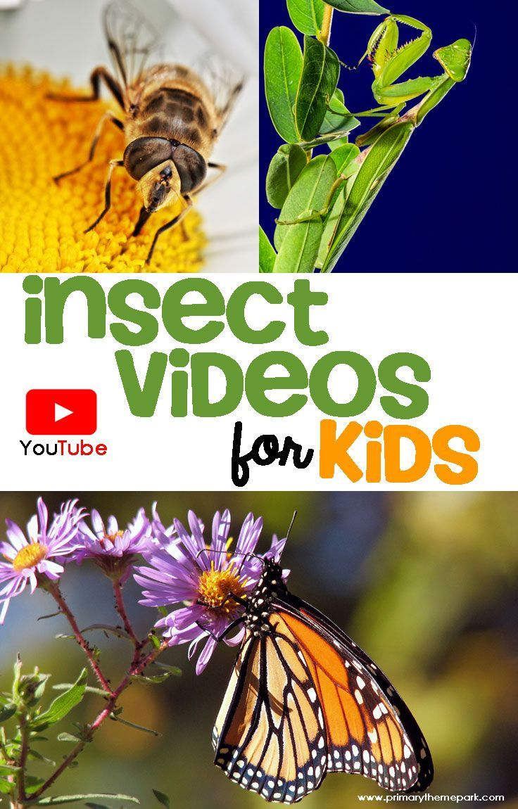Bring insects to life with these insect videos. A great teaching tool for kids!