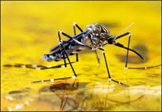 book environment inviting office pest control from Sydney Pest Services.
