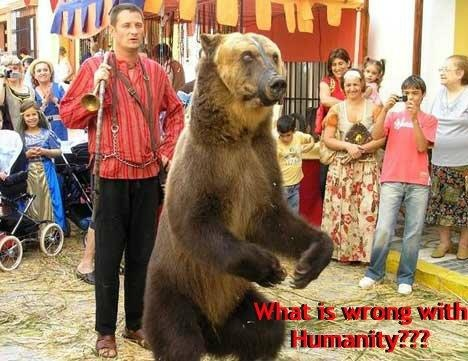 animals suffer for our amusement or 12 reasons to boycott the circus cage wild animals and force them to perform tricks for our amusement the abuse circus animals suffer at the hands.