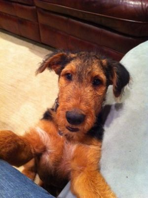My sweet boy (3 months) by nita
