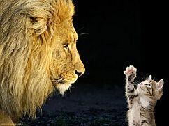 lion-vs-cat.png