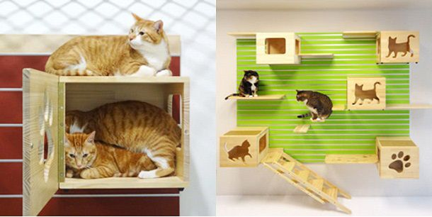 お家でのんびり過ごす猫たちですが、時には運動が必要なもの。 「Modular Cat Climbing Wall」なら壁一面がキャットウォークになるので、猫たちの運動不足解消にもってこいです。 しかも、カスタマイズできるので、デザインは自由自在! 猫が飽きることもなさそうです。 アルミハンガープレートを壁に取り付けて、ボックスや階段を組み合わせれば完成!     元気過ぎる猫には、オプションの猫用車輪もおすすめなんだとか。 一心不乱にランニングを頑張っている姿がかわいいですね。   これならずーっとお家で猫たちに楽しんでもらえそう!  [via design ruiz]