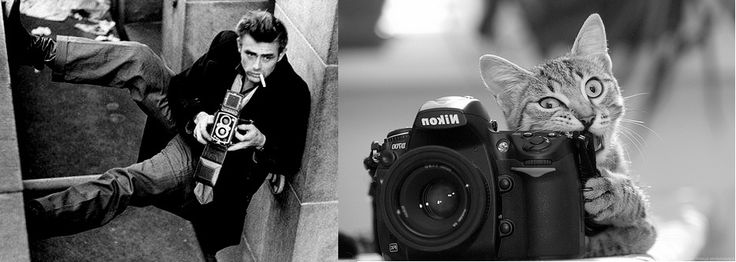 Des hommes et des chatons...  sur Tumblr.