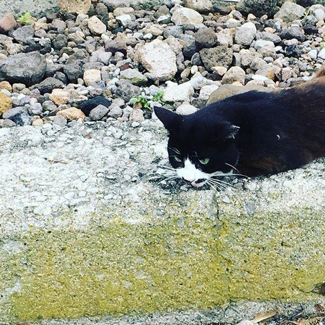 【yuout6206】さんのInstagramをピンしています。 《海を眺めてたら相棒が出来ました。 ニライカナイを探したい。沖縄へ行きたい。  ニライカナイって、沖縄の方の海の底にあると言われてる異界。祖先が守護神へと生まれ変わる場所のこと。  #海 #猫が寄ってきて離れない #相棒はいつも猫 #海はどこまでも繋がってる #sealover #いろんな海へ行きたい》