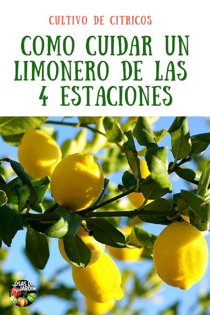 Encantar Tutorial and Ideas Fruit Plants, Fruit Trees, Terrace Garden, Garden Planters, Hair Growth Tips, Green Life, Vegetable Garden, Gardening Tips, Outdoor Gardens