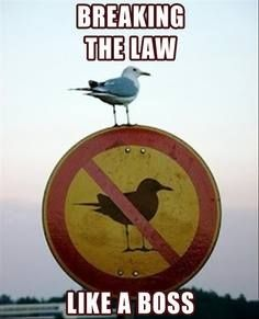 This is for you, @Sheryl Salisbury Bannister - Breaking the law like a boss!