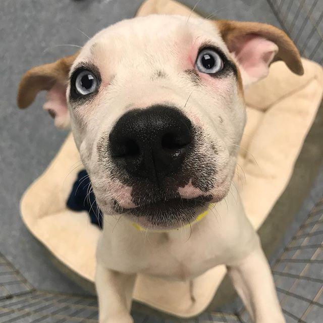 We Re Just Going To Leave These Pics Of Adoptable Pupper Pickles Right Here For Ya She S Only About 3 Months Old Loves Ba Canine Care Losing A Dog Best Dogs