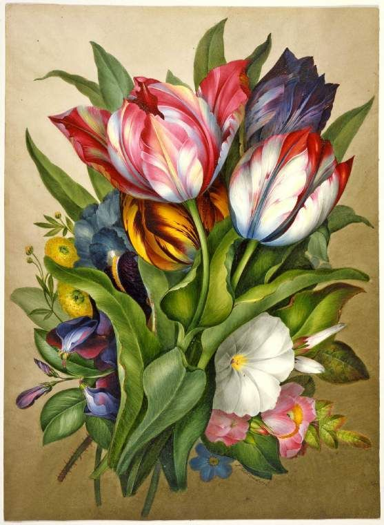 James Holland, Spray of tulips, everlasting pea, mild rose and hibiscus, 1820…
