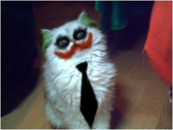 Meow so serious lolFunny Pics, Halloween Costumes, The Jokers, Funny Pictures, Funny Cat, Crazy Cat, Funny Animal, So Funny, White Cat