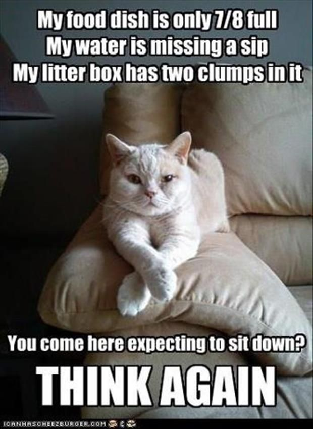 Best Funny Cats Images On Pinterest Beads Beautiful And Cats - Hilarious cat owners struggles