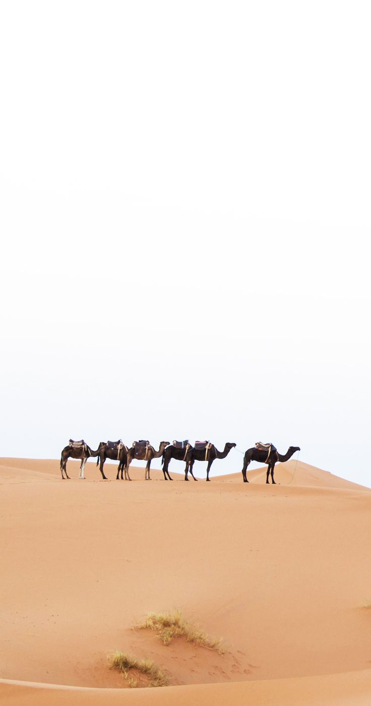 Merzouga, Sahara Desert, Morocco, West Africa  (Places I Want to Visit)