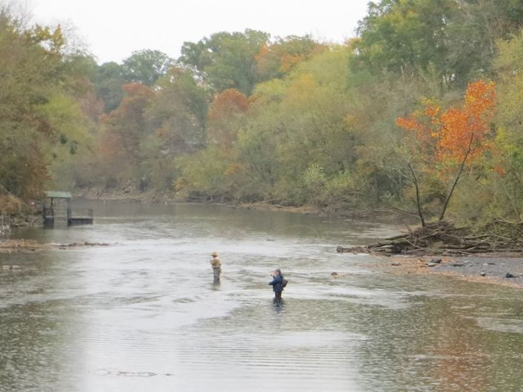 17 best images about arkansas fall color on pinterest for Fly fishing arkansas