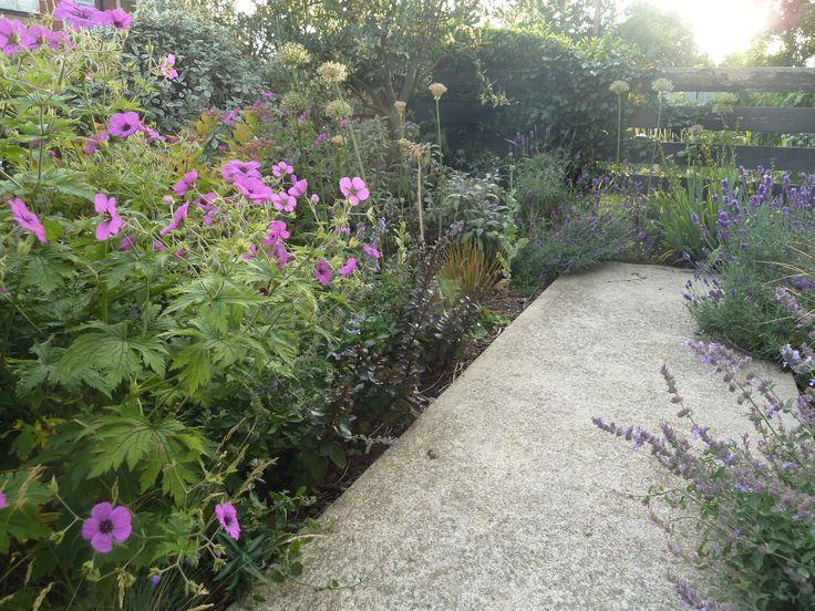 Lavender, Nepeta and bright pink Geranium psilostemon.