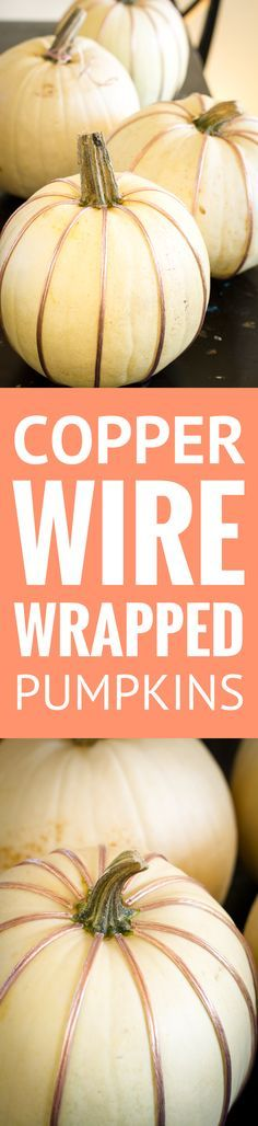 Copper Wire Wrapped Pumpkins -- white pumpkins wrapped in copper speaker wire (so smart!)… An easy and elegant fall decor DIY that also happens to be super budget-friendly!   no carve pumpkin ideas   no carve pumpkin decorating   fan decor ideas   fall decor diy   fall decorations   fall decor ideas for the porch   fall decor ideas for the home   find the tutorial on unsophisticook.com