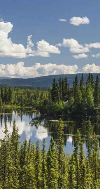 Bien qu'elle habille le Canada du Yukon jusqu'à Terre-Neuve-et-Labrador sur une bande large de 1 000 kilomètres, la forêt boréale interrompt son élan au pied de l'océan Atlantique pour reprendre sa cavalcade de la Baltique à l'Oural avant de finir sa course incognito en Sibérie, sous le nom de Taïga.