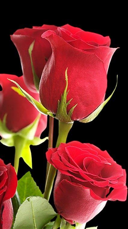 Las 25 mejores ideas sobre rosas rojas en pinterest - Rosas rosas hermosas ...