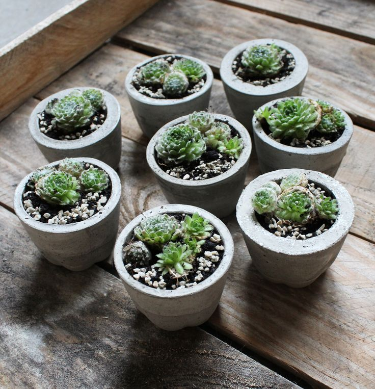 Köszönőajándék #concrete #succulent #plants #greenery
