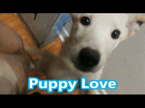 Happy Greeting - Puppy Love - Funny Happy Moments Vlog