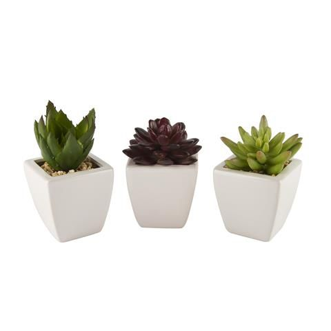 Set Of 3 Succulents | Kmart