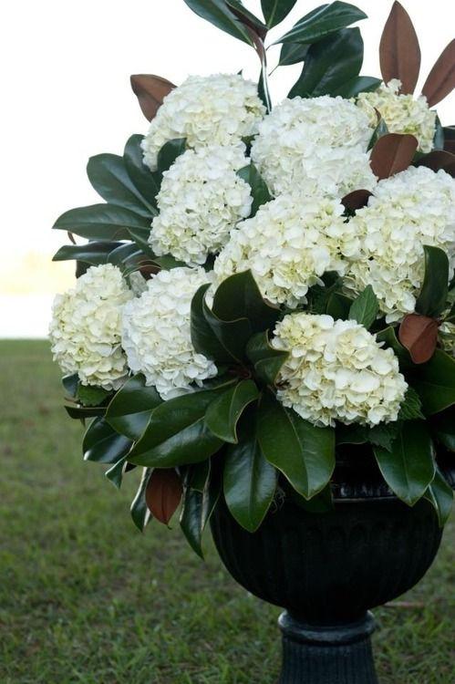 magnolia and hydrangea