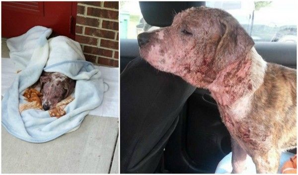Justice For Lily! Emaciated And Covered In Mange She Was Dumped At A Doctor's Office in Sanford, NC! | PetitionHub.org