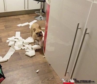 ähöm da hat doch glatt einer die Klorolle in die Küche geschmissen keine Ahnung wer damit gespielt hat...