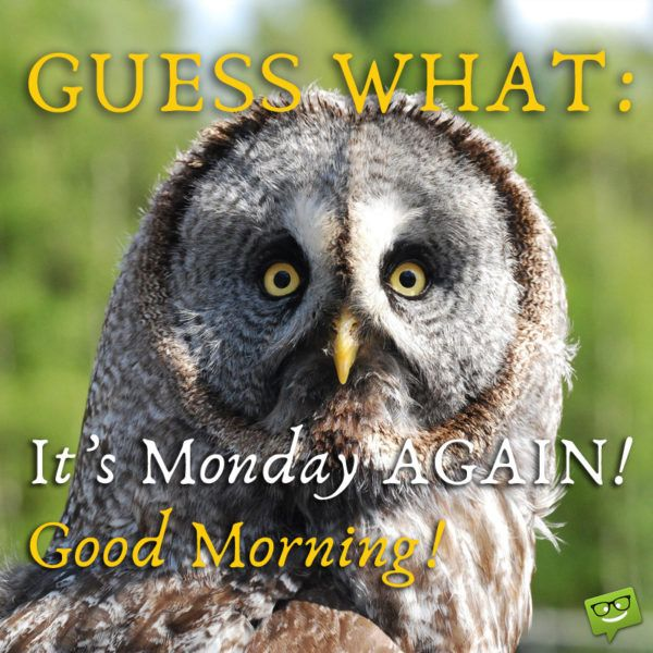 Image result for oh it's monday again pics