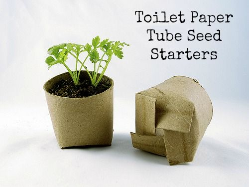 Toilet Paper Tube Seed Starters