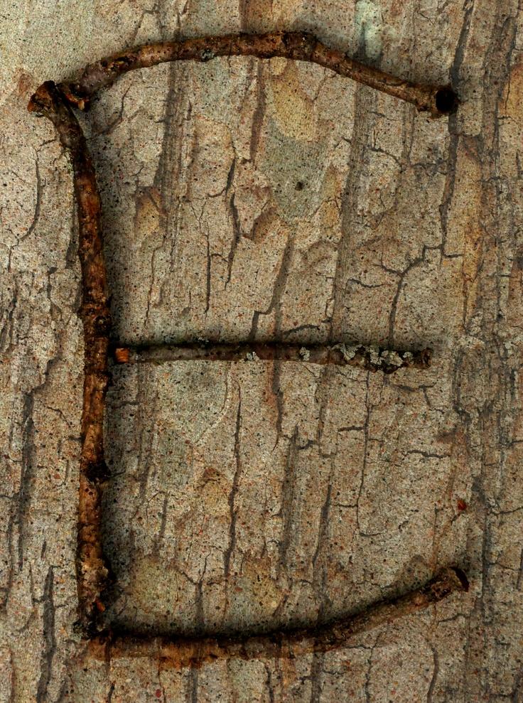 Nature letter E | Nature letters | Pinterest