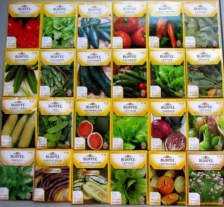 Burpee Seeds  -   Vegetable -  24 NEW Packets , Packaged for 2015 FREE Shipping.