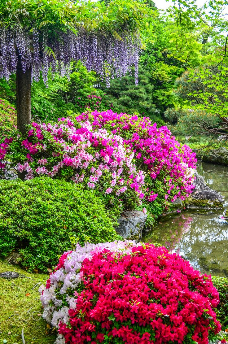 146 best okrasnÁ zahrada images on pinterest | garden paths