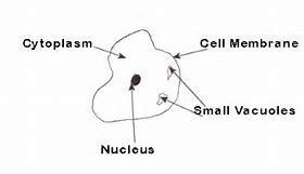 Best 25 Human cell diagram ideas on Pinterest | Human