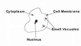 Best 25 Human cell diagram ideas on Pinterest | Human