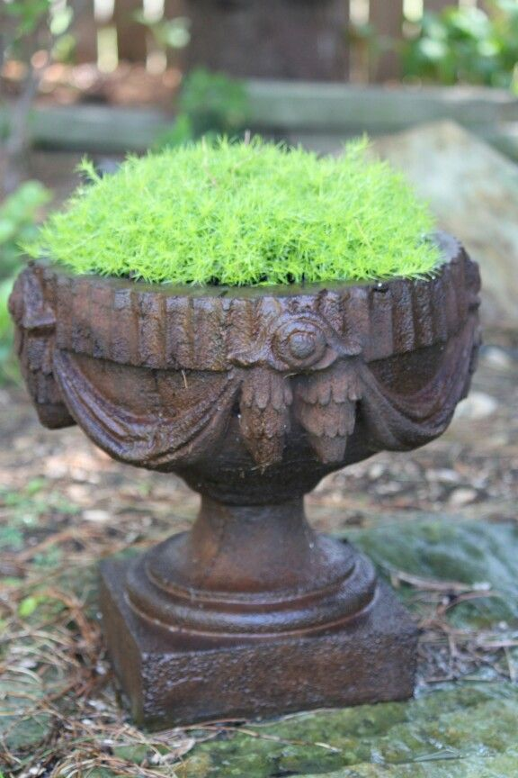 I love filling my pots with moss