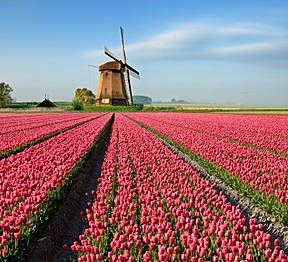 Amsterdam, Netherlands - It's tulip time in Amsterdam! Enjoy the colorful collage of flowers during the spring season.
