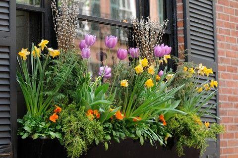 gorgeous spring arrangementGardens Ideas, Spring Flower, Balconies Gardens, Windowboxes, Windows Boxes, Windows Flower Boxes, Flower Ideas, Artificial Flower, Window Boxes