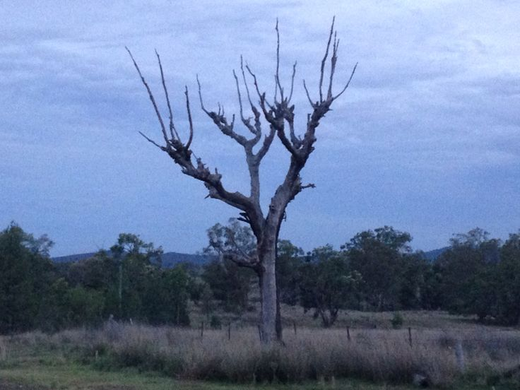 Bingara NSW