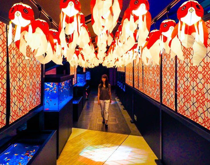 すみだ水族館「江戸リウム」がパワーアップ!~幻想的な金魚が揺れる江戸の夏祭りも開催 | 東京都 | トラベルjp<たびねす>