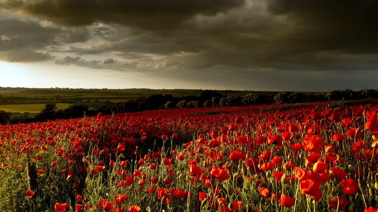 Download Wallpaper 3840x2160 Poppies, Flowers, Field, Sunset 4K ...