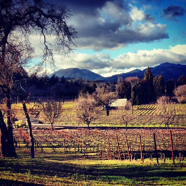 Napa Valley Guide to Camping, the Great Outdoors, and Wine: Napa Valley Campgrounds