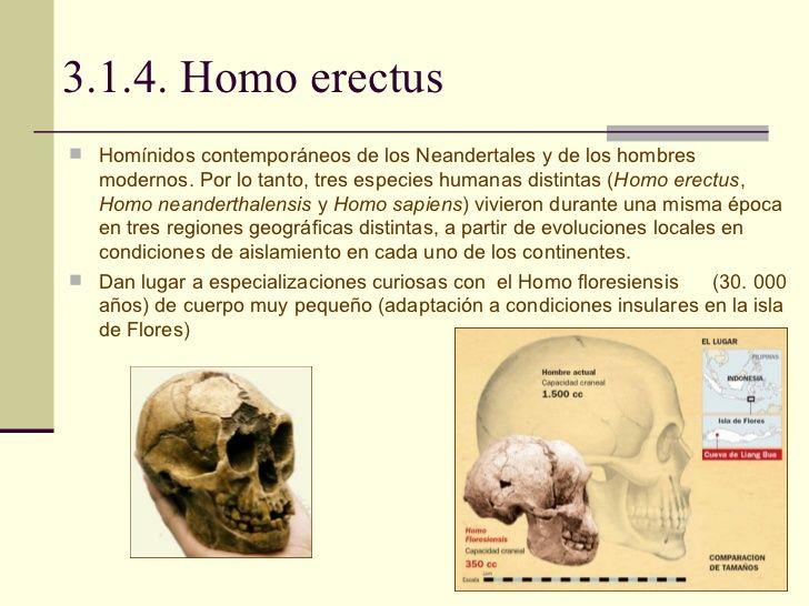 Evolución del Homo erectus.