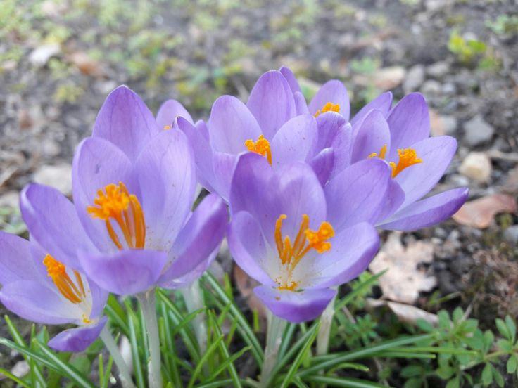#spring#flowers#freedom#love#nature#purple#orange#happiness 😊🏵🌺