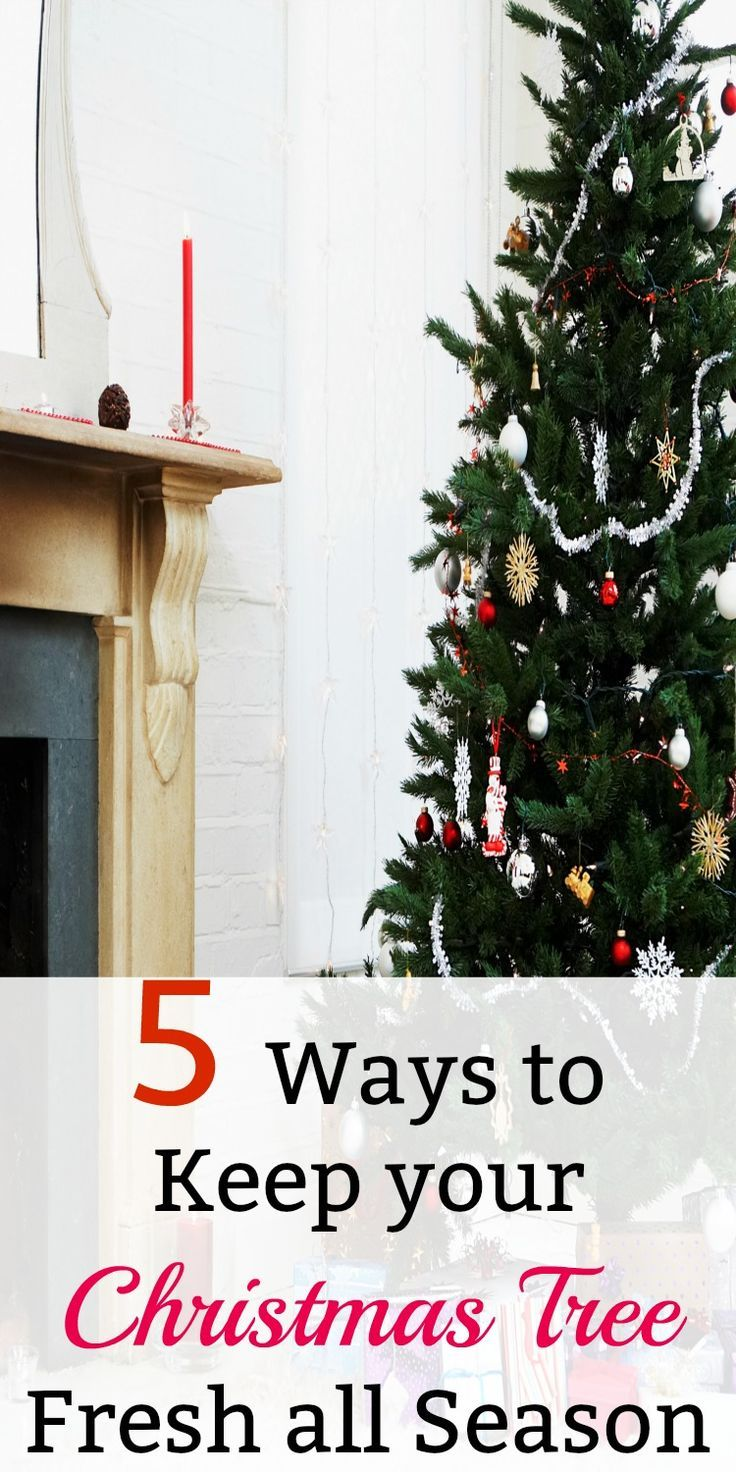 5 Ways to Keep your Christmas Tree Fresh All Season | Let\'s Pin Each ...