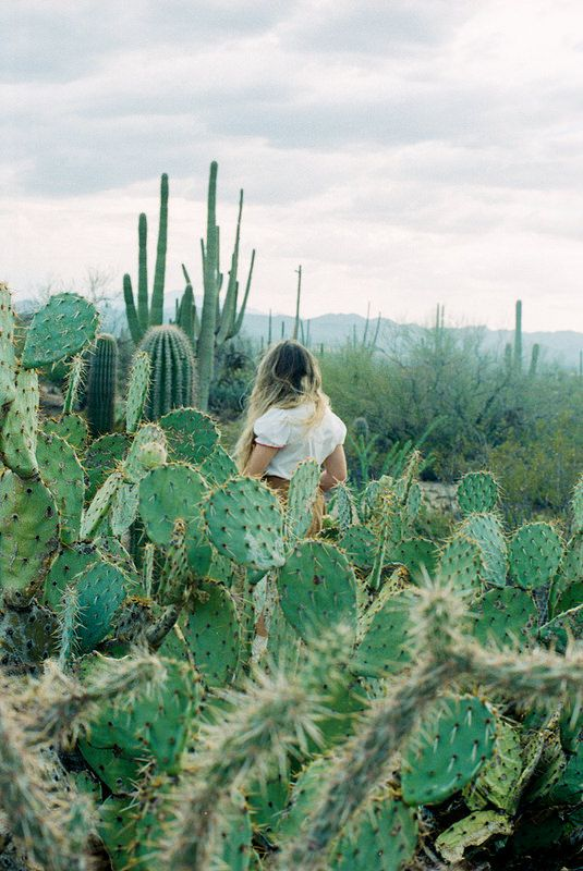 Desert mirage. Full of cactus.