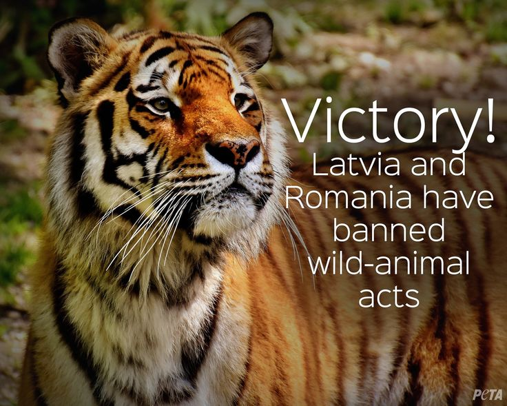 Two More EU Countries Just Banned Wild-Animal Acts (Latvia and Romania)