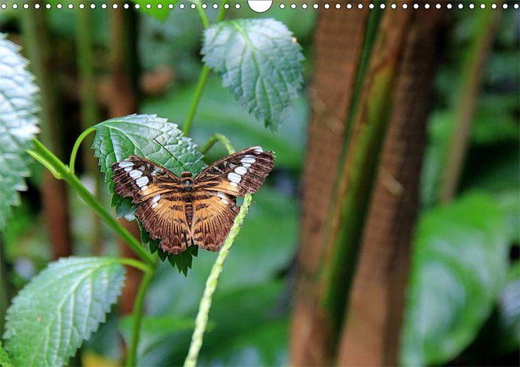 """Tier-Posterbuch """"Schmetterlinge der Tropen"""", Seite 11"""