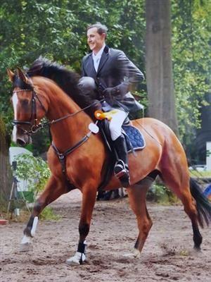 Pferde zu verkaufen: 5j.Stute Lordanos-Contender -Lord