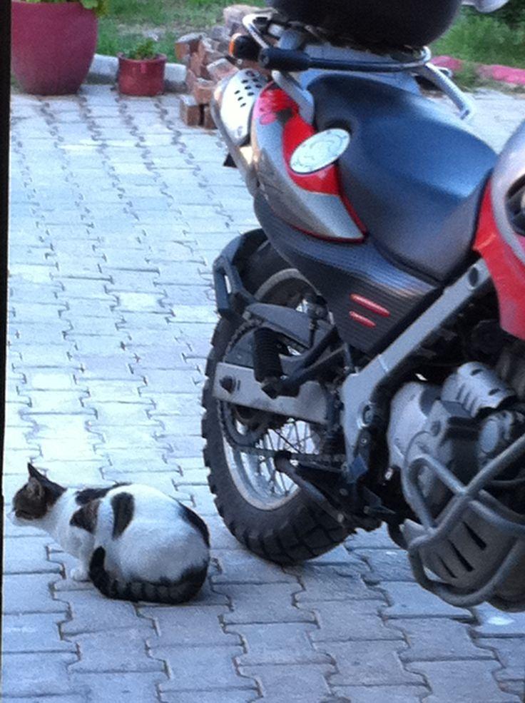 Cat and Big cat waıtıng me )