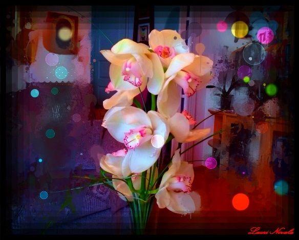 Orkidea 2